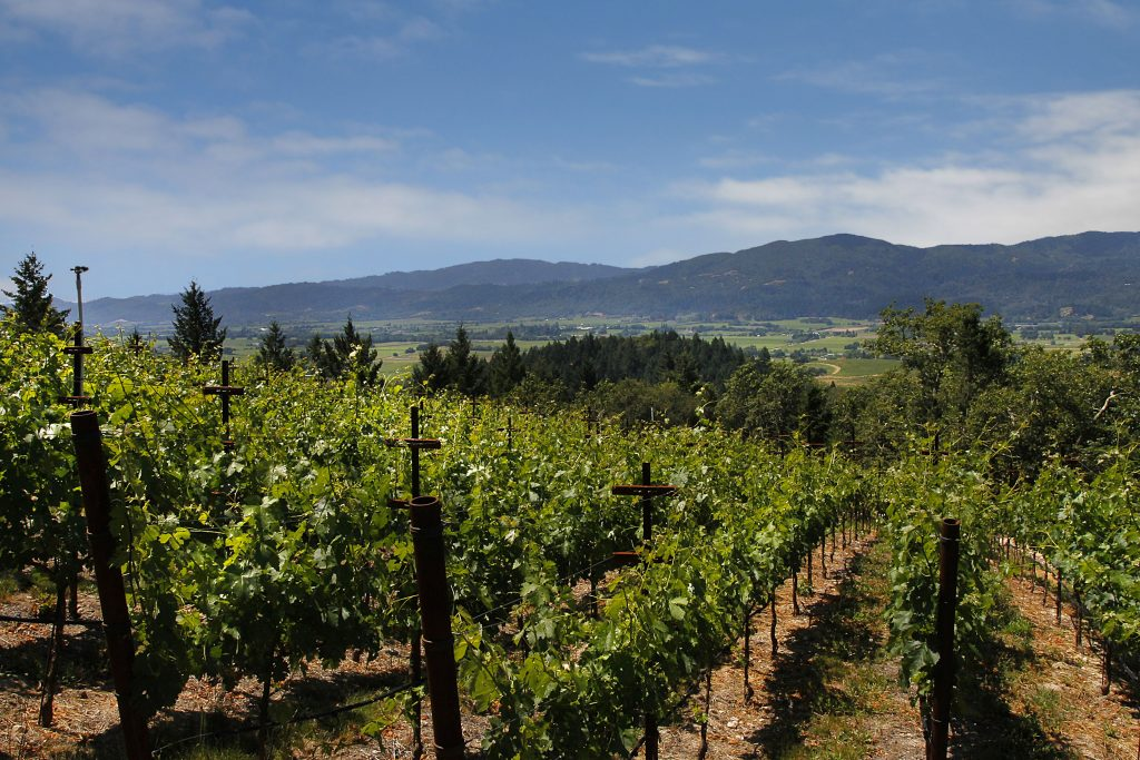 beautiful shot of Napa Vineyard