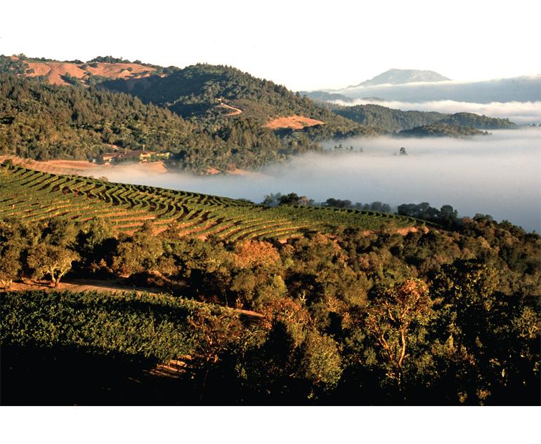 crop report image