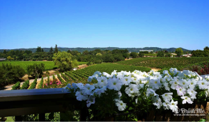 Sonoma Wine Country Healdsburg at its Heart