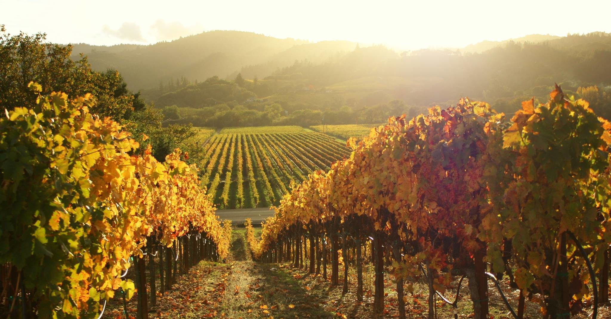 Vineyard Homes for Sale in Sonoma CA by Latife Hayson
