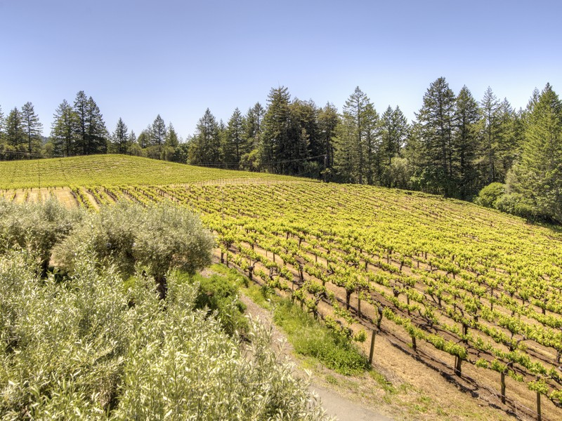 5800 petrified forest vineyards