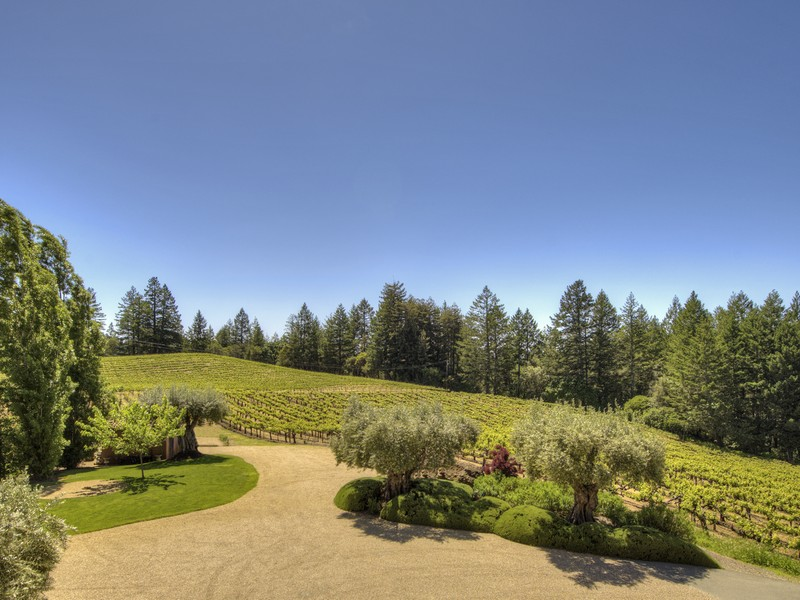 5800 petrified forest vineyards and view