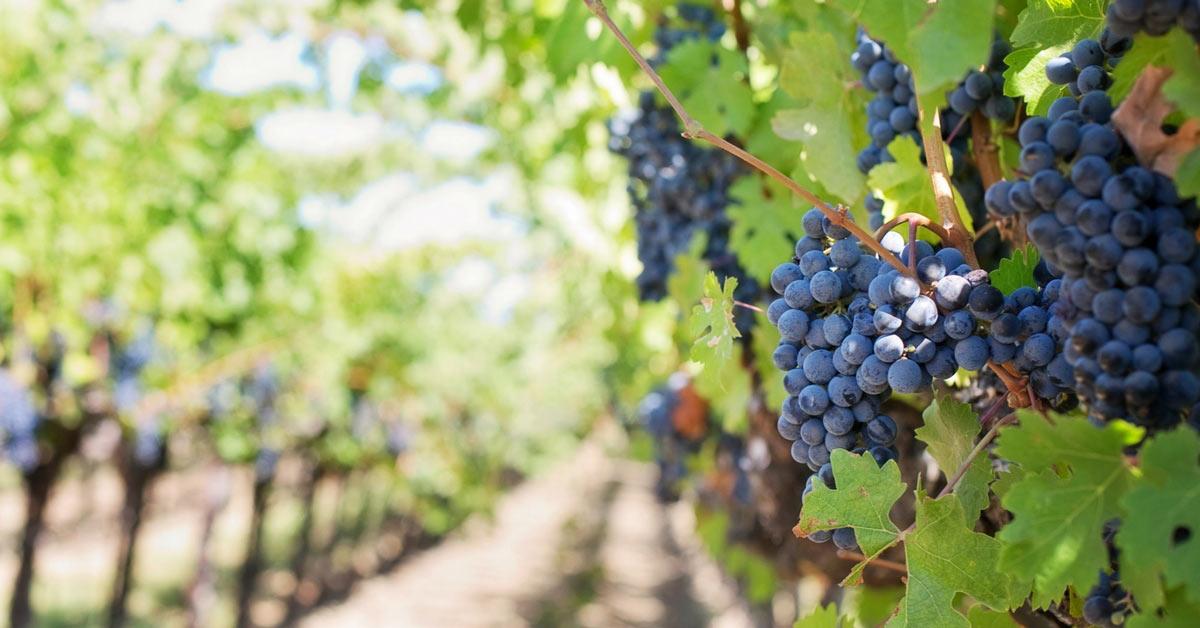crop report napa valley