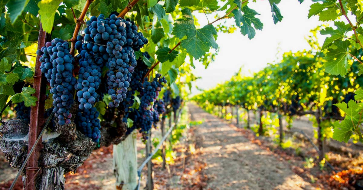 napa valley vineyards and wineries