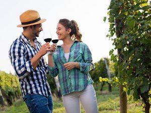 Grapes Sonoma County