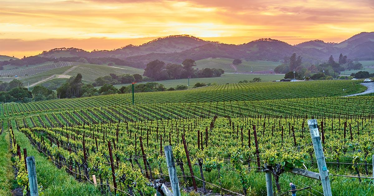 Sonoma County grapes sustainability