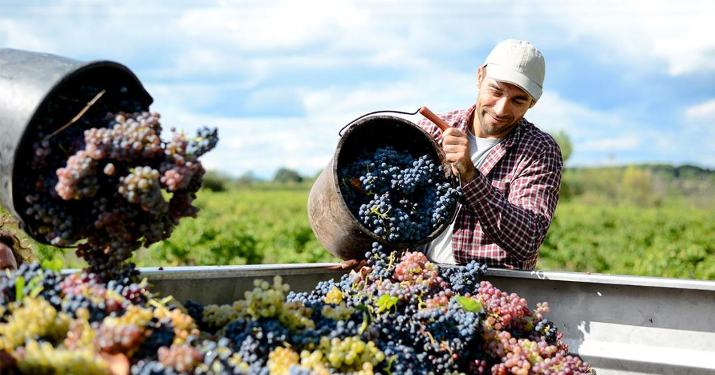 Napa Valley Winemaker and Climate Change